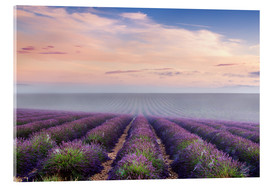 Matteo Colombo - Landscape: lavender field in summer at sunrise, Provence, France