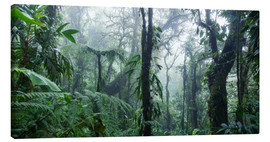 Lienzo  Misty Rainforest, Costa Rica - Matteo Colombo
