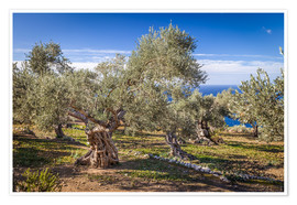 Póster  Ancient olive trees in Mallorca (Spain) - Christian Müringer