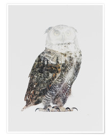 Póster  Arctic Owl - Andreas Lie
