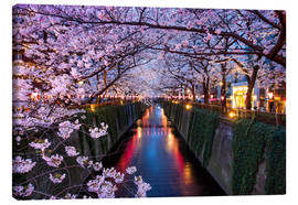 Lienzo  Pink cherry blossoms in Tokyo Japan - Jan Christopher Becke