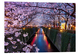 Cuadro de PVC  Pink cherry blossoms in Tokyo Japan - Jan Christopher Becke