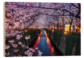 Cuadro de madera  Pink cherry blossoms in Tokyo Japan - Jan Christopher Becke