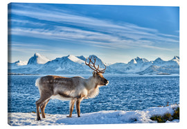 Lienzo  Reindeer in snow covered landscape at sea - Jürgen Ritterbach