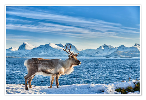 Póster Reindeer in snow covered landscape at sea