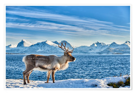 Póster  Reindeer in snow covered landscape at sea - Jürgen Ritterbach