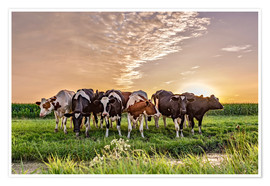 Póster beautiful sunset cows gathering