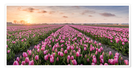 Póster tulips fields holland