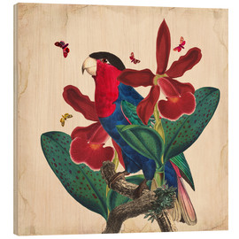 Cuadro de madera  Oh My Parrot VII - Mandy Reinmuth