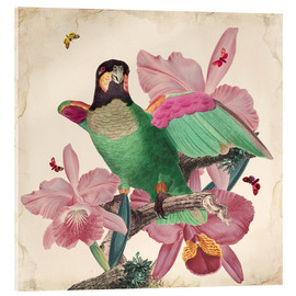 Metacrilato  Oh My Parrot VIII - Mandy Reinmuth