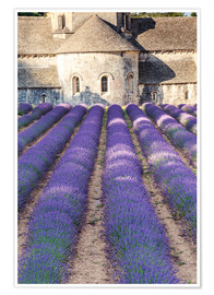 Póster Lavender field and famous Senanque abbey in Provence, France