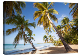 Lienzo  Palm trees and sandy beach in the caribbean, Martinique, France - Matteo Colombo