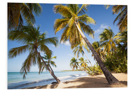 Cuadro de PVC  Palm trees and sandy beach in the caribbean, Martinique, France - Matteo Colombo