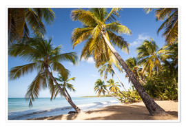 Póster  Palm trees and sandy beach in the caribbean, Martinique, France - Matteo Colombo