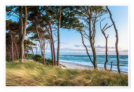 Póster Coastal Forest and Beach at the Baltic Sea