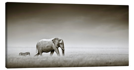 Lienzo  Elephant walking past zebra size comparison - Johan Swanepoel