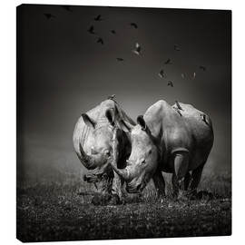 Lienzo  Two Rhinoceros with Birds - Johan Swanepoel