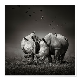 Póster  Two Rhinoceros with Birds - Johan Swanepoel
