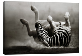 Lienzo  Zebra rolling upside down on dusty desert sand - Johan Swanepoel