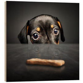 Cuadro de madera  Dachshund puppy looking at out of reach treat - Johan Swanepoel