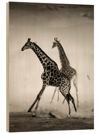 Cuadro de madera  Giraffes running in the dust - Johan Swanepoel
