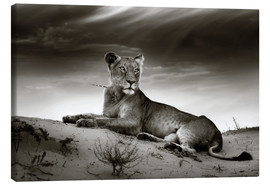 Lienzo  Lioness resting on top of a sand dune - Johan Swanepoel