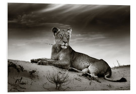 Cuadro de PVC  Lioness resting on top of a sand dune - Johan Swanepoel