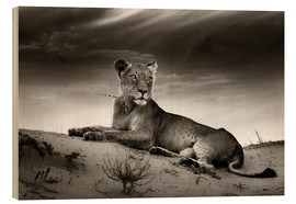 Cuadro de madera  Lioness resting on top of a sand dune - Johan Swanepoel
