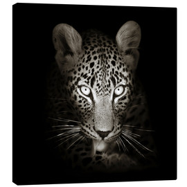 Lienzo  Leopard portrait licking it's paw - Johan Swanepoel