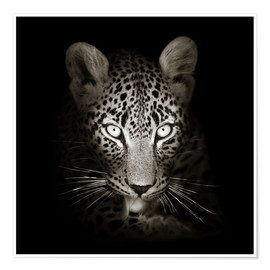 Póster  Leopard portrait licking it's paw - Johan Swanepoel