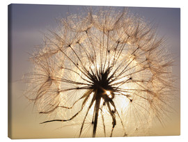 Lienzo  Dandelion in sunlight
