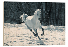 Madera  Gray mare in snow