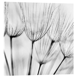 Metacrilato  black and white dandelion