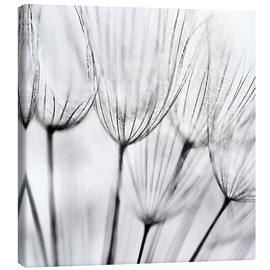 Lienzo  black and white dandelion