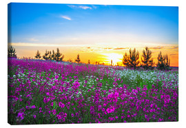 Lienzo  Sunrise over a blossoming meadow