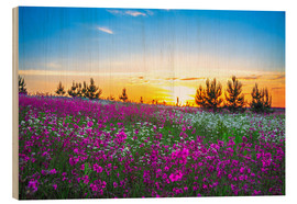 Madera  Sunrise over a blossoming meadow