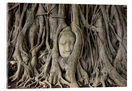 Cuadro de metacrilato  Buddha statue in the tree roots at Wat Mahathat