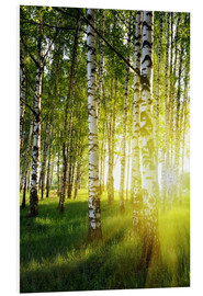 Forex  Birches flooded with light