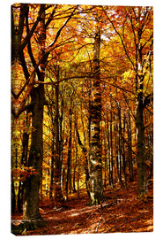 Lienzo  yellow trees in a forest