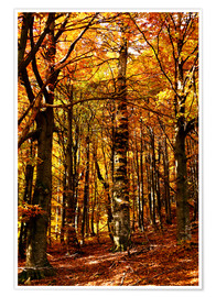 Póster  yellow trees in a forest