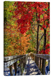 Lienzo  Wooden stairs in Autumn forest