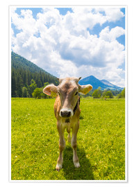 Póster  Young Calf - Michael Helmer