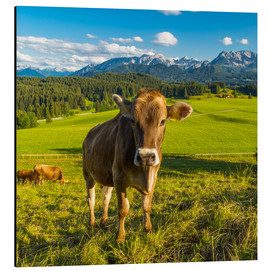 Aluminio-Dibond  Funny Cow in the Alps - Michael Helmer
