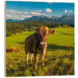 Michael Helmer - Funny Cow in the Alps
