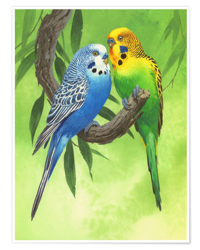 Póster 25917 Budgies on Green Background