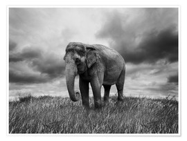 Póster Elephant standing in the grass