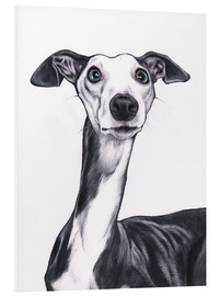 Forex  Whippet, Blue and white - Jim Griffiths
