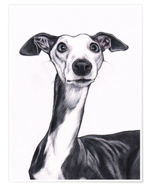 Póster  Whippet, Blue and white - Jim Griffiths