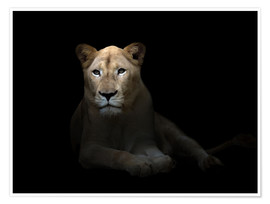 Póster  White Lioness in the dark night