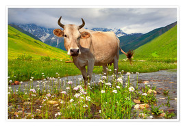 Cattle on a mountain pasture